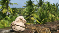 Coconut on Tropical Island Stock Footage
