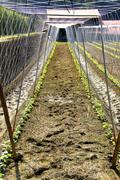 Footprints on the vegetable garden at noon - stock photo