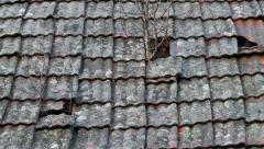 Trees growing out of a roof Stock Footage
