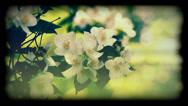 Jasmine flower called the