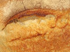 appetizing fresh bread crust. - stock photo