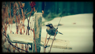 Stock Video Footage of Beautiful birds flew to the feeder.