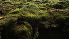 Moss Stock Footage