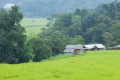 home adjacent rice fields - stock photo