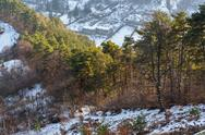 Stock Photo of coniferous forest edge in winter