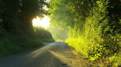 English Country Lane Sunlight Stock Footage