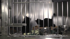 Two playful little kittens Stock Footage