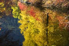 Fall colors close up wenatchee river stevens pass leavenworth washington Stock Photos