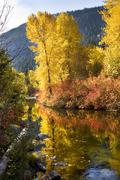 Fall colors log  wenatchee river stevens pass leavenworth washington Stock Photos