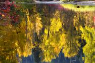Stock Photo of fall colors wenatchee river relections forest stevens pass leavenworth washin