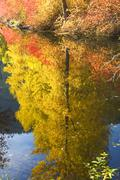 Fall colors wenatchee river yellow tree reflections river stevens pass leaven Stock Photos