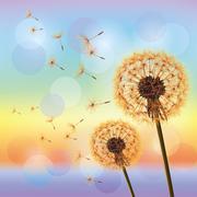 flowers dandelions on background of sunset - stock illustration