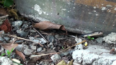 A Baby Snake retreats back under a flower pot Stock Footage