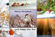 Stock Illustration of winter greeting card