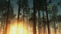 Rising sun light in forest Stock Footage