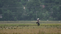 Pan from Ladies working at the farm land in Mai Châu Stock Footage