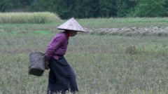 Elderly vietnamese woman walks on the land in Mai Châu Stock Footage