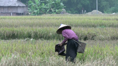 Elderly vietnamese woman works on farm land in Mai Châu Stock Footage