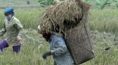 Woman walking away with basket full of hay in Mai Châu Stock Footage