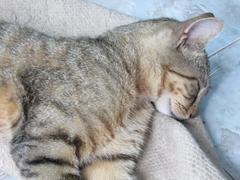 kitty sleeping - stock photo