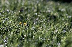 Morning grass - stock photo
