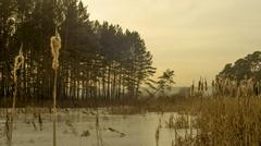 winter reeds - stock photo