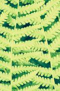 fern leaf, close up - stock photo