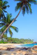 beach with coconut palm trees - stock photo