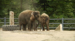 A young elephant sprays sand from his trunk while in captivity. Slow motion - stock footage