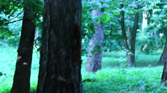 Squirrel in the green bushes in the park Stock Footage