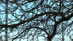 Tree 4 Stock Footage