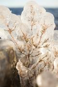 Small plant covered in ice - stock photo