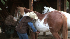 COWGIRL/WRANGLER GROOMING HORSE IN ROCKY MOUNTAINS Stock Footage