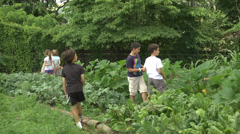 Kitchen garden looking for vegtables Stock Footage