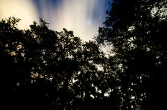 trees against night sky with clouds and stars - stock photo