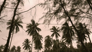 Stock Video Footage of Time lapse of coconut tree.