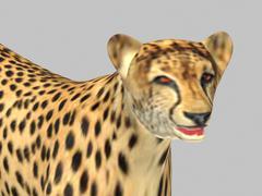 Gepard 3D Model
