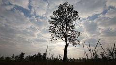 Silhouette tree with sky Stock Footage