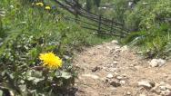 Stock Video Footage of POV of Walking on Path, View of Hikers, Tourists, Hiking Trekking in Mountains