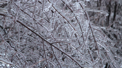 Icicles Coated Trees and Branches Icestorm Stock Footage