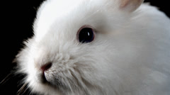 Adorable bunny sniffs the air. Close up shot. Stock Footage