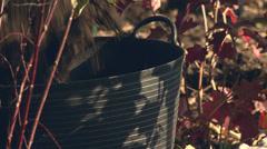 Gardening - stock footage