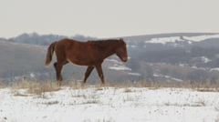 Horses grazing on high mountain pasture Stock Footage