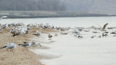 Flock of seagulls at the seaside Stock Footage