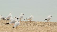 Seagulls on the empty beach Stock Footage