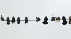 Doves perched on a wire Stock Footage