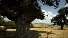 Tuscan countryside with olive trees Stock Footage
