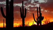Stock Video Footage of Saguaro Cactus Colorful Sunset Time Lapse