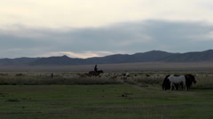 Nomad riding a horse between the cattle Stock Footage