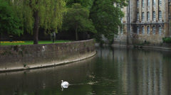 WS Swan on river / Bradford on Avon, Wiltshire, UK - stock footage